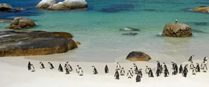 South Africa Luxury Holidays
